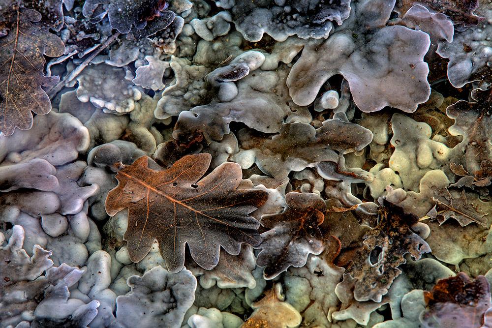 Beekje met rottende bladeren