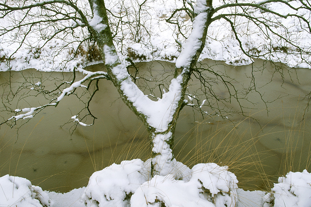 Gaffelberk in de sneeuw
