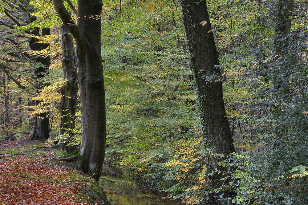 Herfst in het sprengengebied op de Veluwe