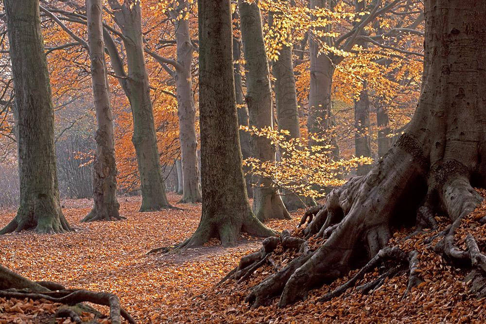 Herfst op de Woldberg