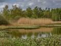Boisven met uitbundige bloei van Waterdrieblad