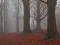 Mist over de de Woldberg