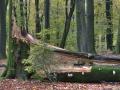 Stormschade in het Tonderbos