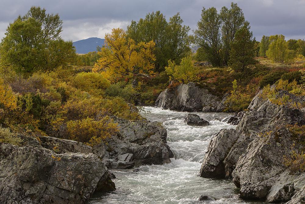 Dovre-rivier, NP-Dovrefjell