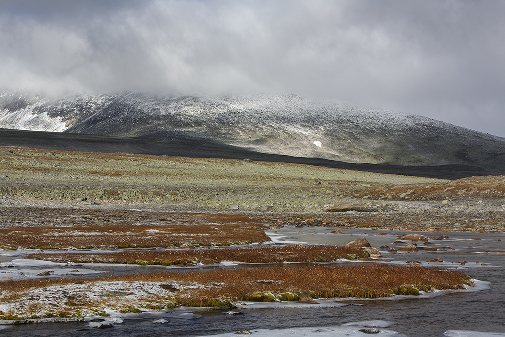 Omgeving Snohetta, Dovrefjell
