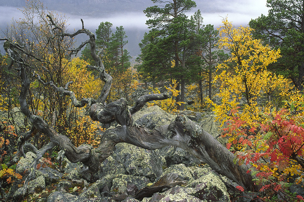 De boom v Fred Hazelhoff