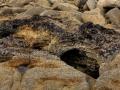 Product van erosie, CoveSea
