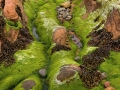 Wieren en stenen. CoveSea