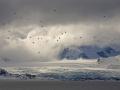 Gletsjerlandschap met Kleine Alken